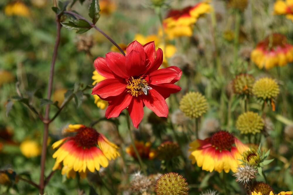 Wild Flowers by Dannii Cockerell