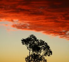 outback sunset by dmontes84