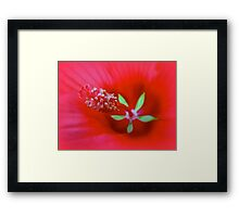 Knowing The Red Hibiscus Framed Print