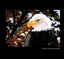 Bald Eagle by Robin Fortin IPA
