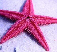 Starfish by cshphotos