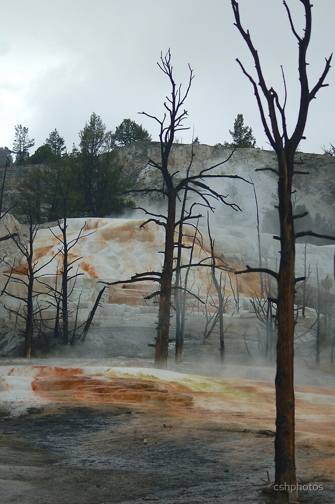 Mammoth Hot Springs by cshphotos