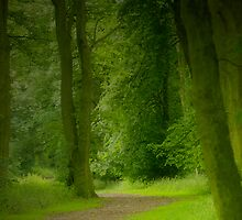 Woodland path by Classicperfection