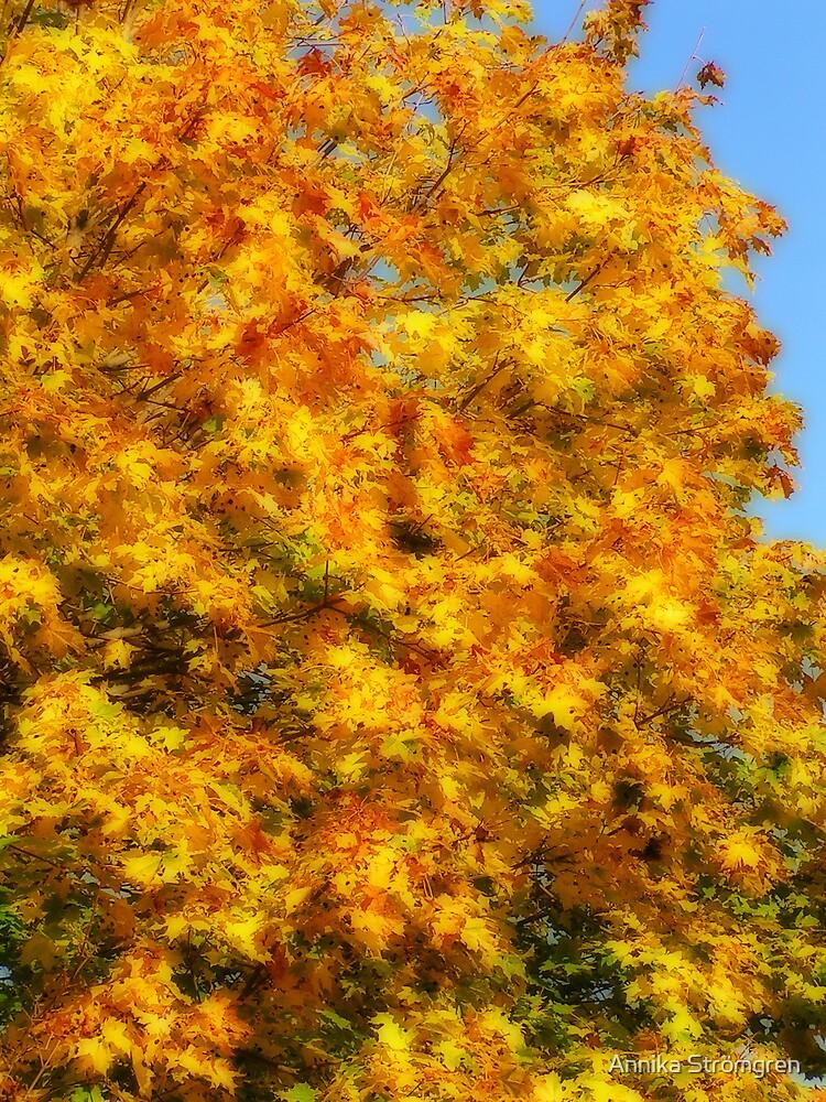 Maple leaves by Annika Strömgren