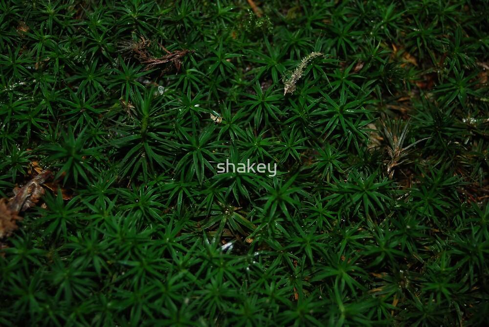 Moss by shakey