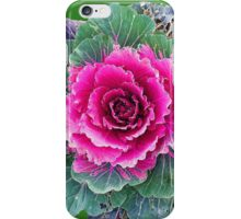Ornamental Kale iPhone Case/Skin