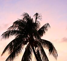 Palm Tree by Rob Tyler
