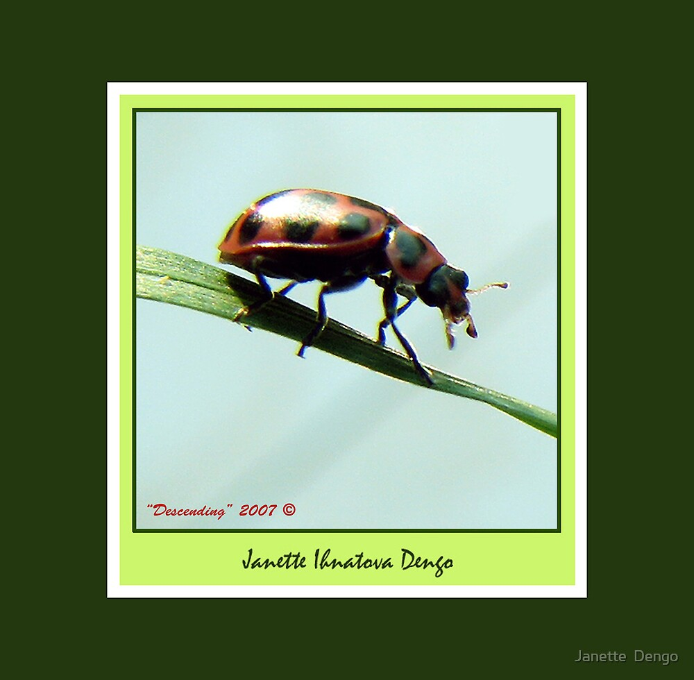 DESCENDING LADY BEETLE by Janette  Dengo