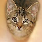 Kitten by CanyonWind