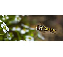 Hovering Hover Fly Photographic Print