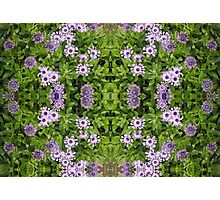 Floral Abstract Photographic Print