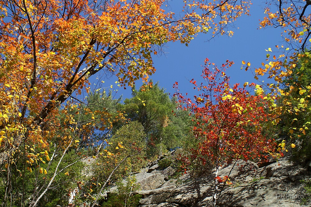 Autumn Colors by PRPhoto