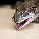 Blue tongue lizard 001 by kevin chippindall