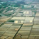 Rice Paddies by greencardigan
