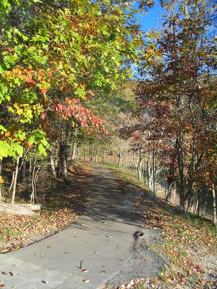 Fall Path by mssphoto