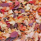 Fall Is Here by cshphotos