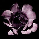 Purple Closed Flower by Ben Herman