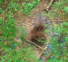 bower bird nest by rebecca Lara bartlett