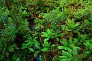 Otway Ranges Rainforest by Darren Stones
