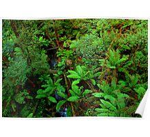 Otway Ranges Rainforest Poster
