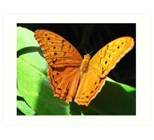 Cruiser Butterfly Melbourne Zoo I Art Print