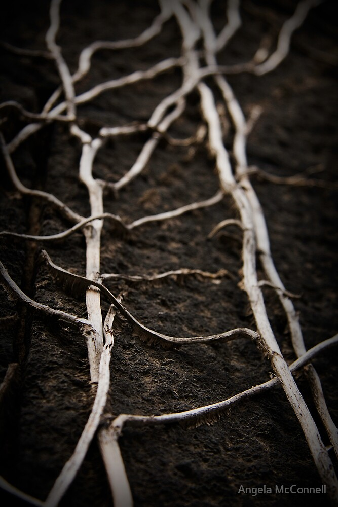 These old Veins... by Angela McConnell
