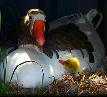 Mother and Chick by David Rozario