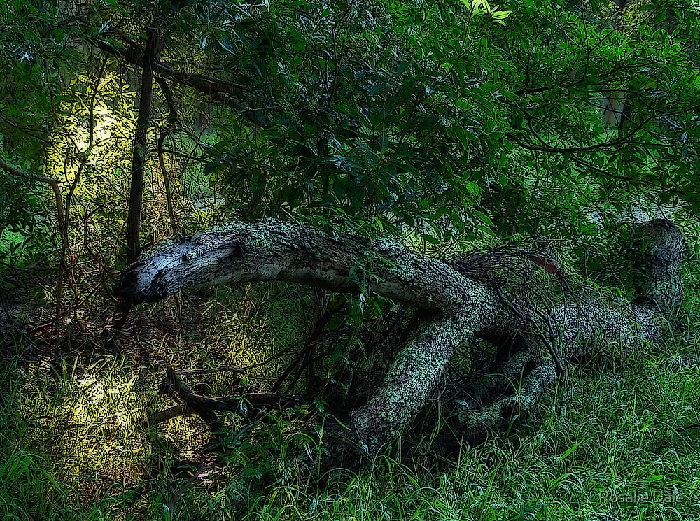 Deep in the woods . . . by Rosalie Dale