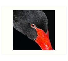 Black Swan. Art Print