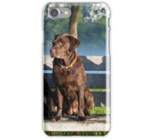 lovely labradors iPhone Case/Skin