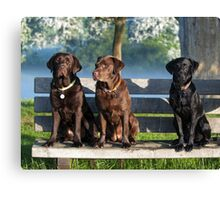 lovely labradors Canvas Print