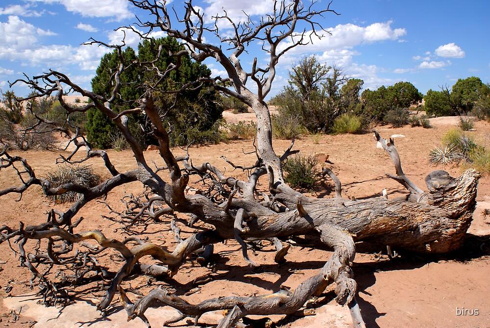fallen tree by birus