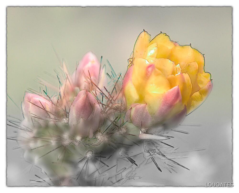 Yellow Desert Flower by LOUOATES