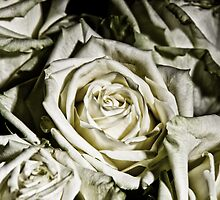 Say It With Flowers IV by Vlastimil Blaha