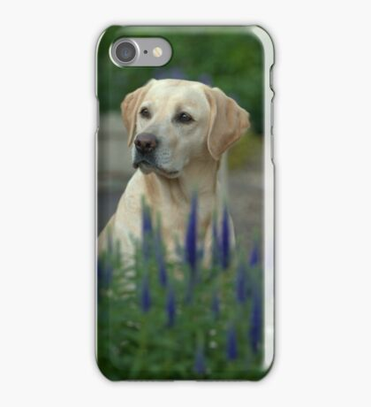 yellow labrador iPhone Case/Skin