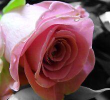 Valentine by SallyAnnLowe