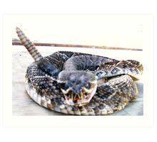 Rattle Snake Art Print