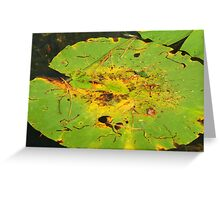 Lillypads Greeting Card