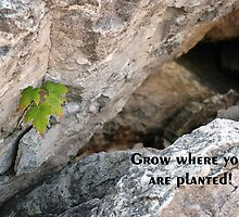 Grow Where You Are Planted by Maria Dryfhout