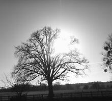Winter's Beauty by SallyAnnLowe
