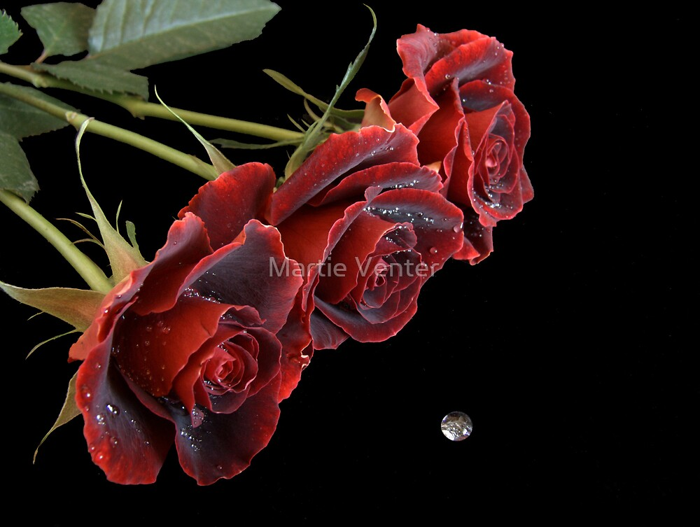 Three Red Roses with Waterdrop by Martie Venter