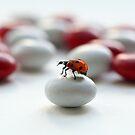 Ladybug :) by Ellen van Deelen