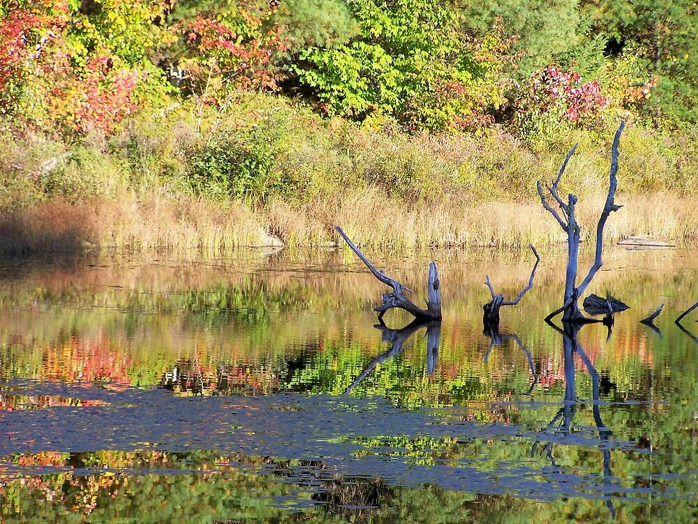 Pond Reflections by Gene Cyr