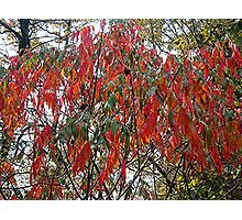The Color of Fall Photographic Print