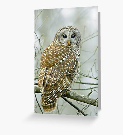 Winter's watchman Greeting Card