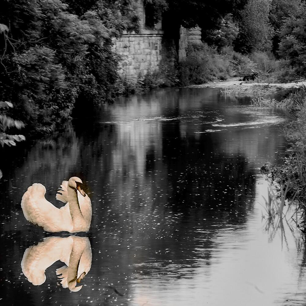 Swan  by Chris Clark