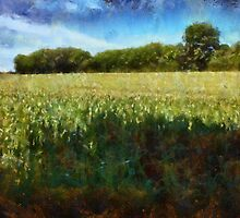 Green wheat field by ronyzmbow
