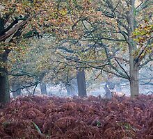 A Red Deer Stag under the Oaks by Judi Lion