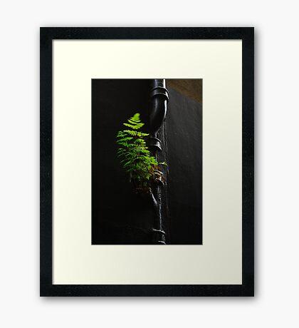 Urban Foliage Framed Print