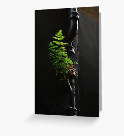 Urban Foliage Greeting Card